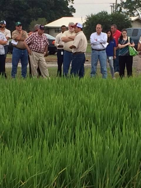Reseachers show their work at Rice Expo